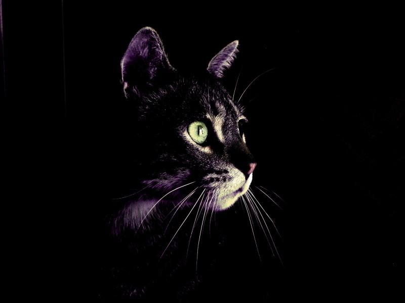 Resultado de imagen para gatos oscuridad